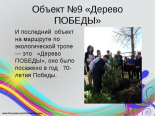 Объект №9 «Дерево ПОБЕДЫ» И последний объект на маршруте по экологической тр