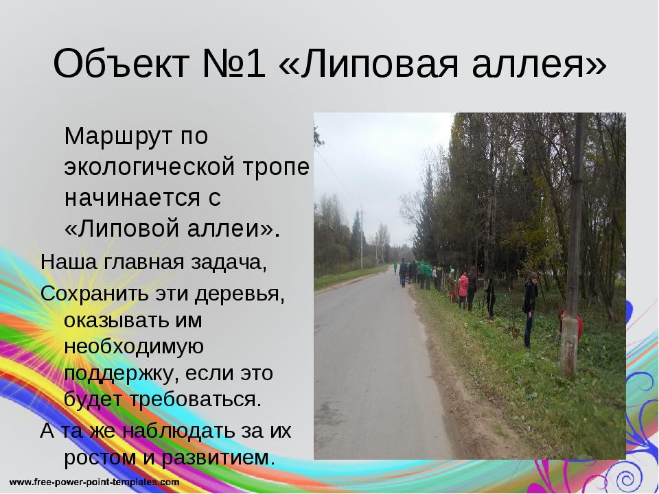 Объект №1 «Липовая аллея» Маршрут по экологической тропе начинается с «Липов...