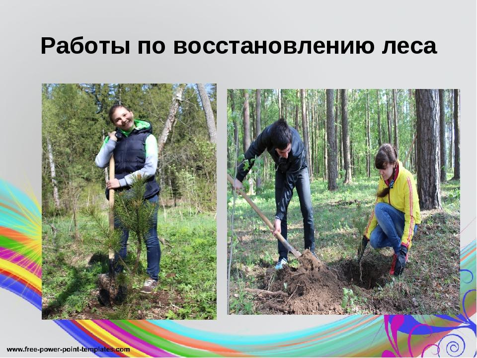 Работы по восстановлению леса