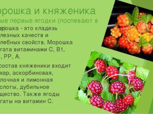 Морошка и княженика Самые первые ягодки (поспевают в июле) Морошка - это клад