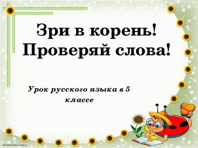 Зри в корень! Проверяй слова! Урок русского языка в 5 классе