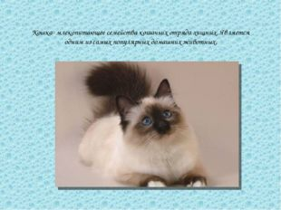 Кошка- млекопитающее семейства кошачьих отряда хищных. Является одним из самы