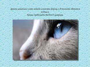 Зрачок кошачьего глаза может изменять форму, и в темноте светится зелёным. Ко