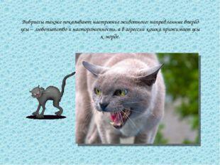 Вибриссы также показывают настроение животного: направленные вперёд усы – люб
