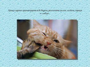 Кошки хорошо ориентируются во вкусах, различают кислое, солёное, горькое и сл