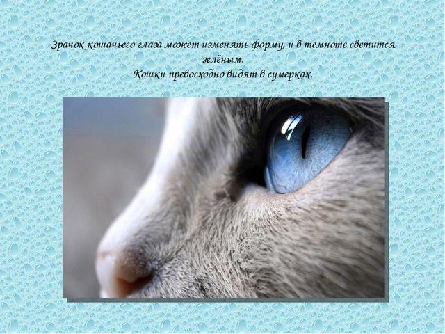 Зрачок кошачьего глаза может изменять форму, и в темноте светится зелёным. Ко...