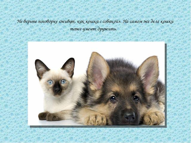 Не верьте поговорке «живут, как кошка с собакой». На самом же деле кошки тоже...