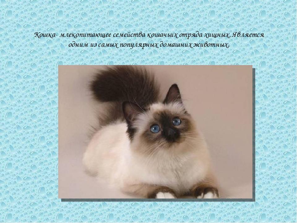 Кошка- млекопитающее семейства кошачьих отряда хищных. Является одним из самы...