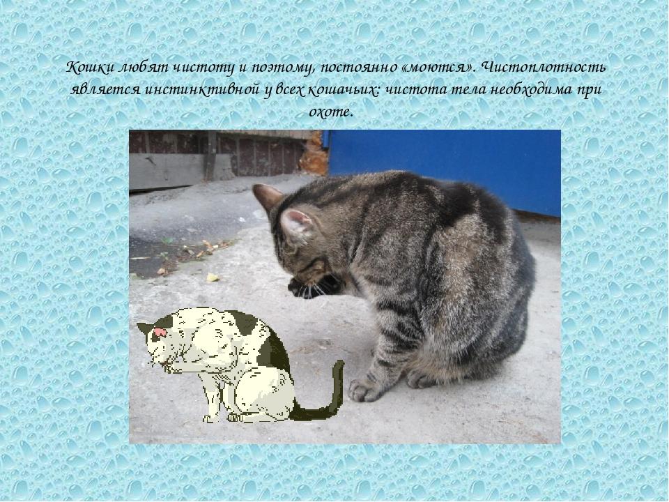 Кошки любят чистоту и поэтому, постоянно «моются». Чистоплотность является ин...