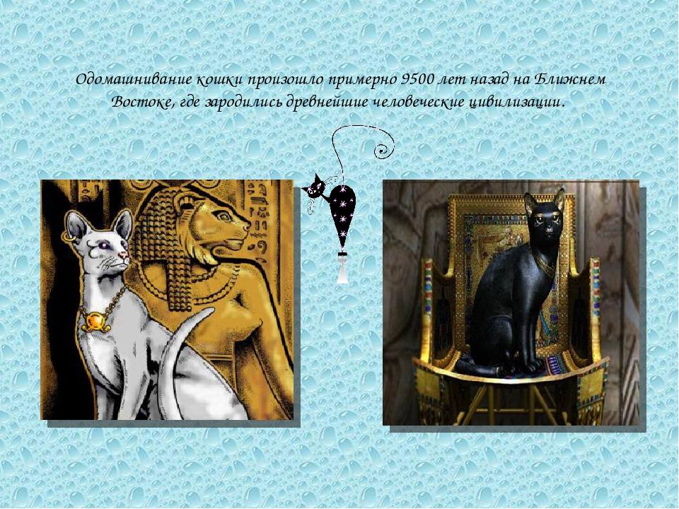 Одомашнивание кошки произошло примерно 9500 лет назад на Ближнем Востоке, где...