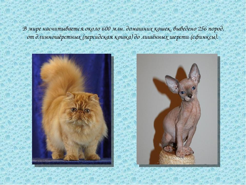 В мире насчитывается около 600 млн. домашних кошек, выведено 256 пород, от дл...