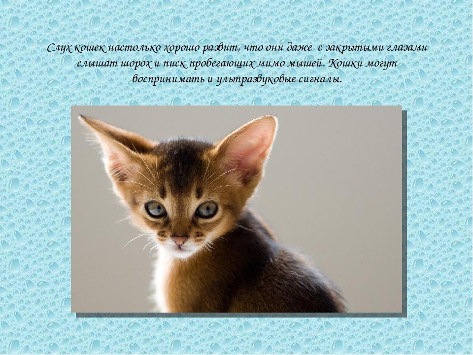 Слух кошек настолько хорошо развит, что они даже с закрытыми глазами слышат ш...