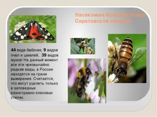 Насекомые Красной Книги Саратовской области 44 вида бабочек, 9 видов пчел и ш