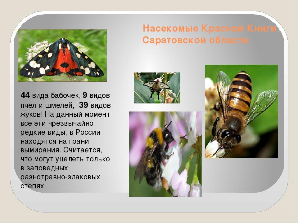 Насекомые Красной Книги Саратовской области 44 вида бабочек, 9 видов пчел и ш...
