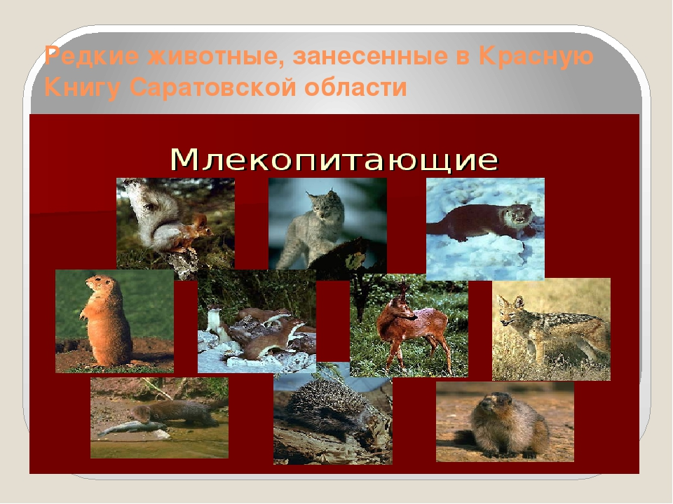 Редкие животные, занесенные в Красную Книгу Саратовской области
