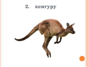 2. кенгуру