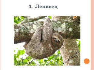 3. Ленивец