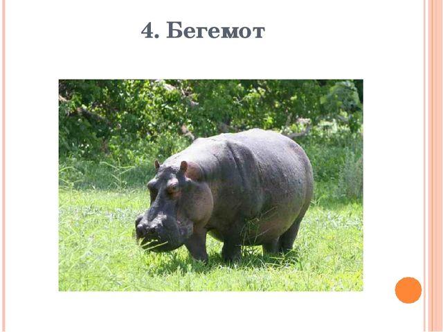 4. Бегемот
