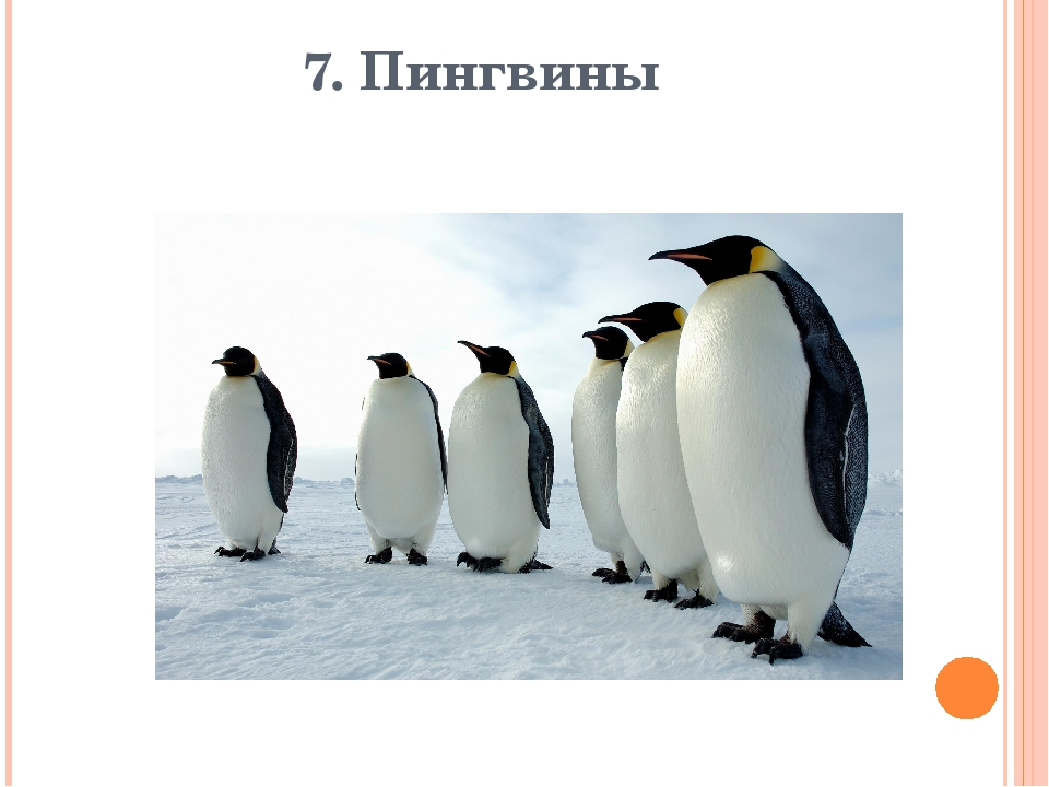 7. Пингвины