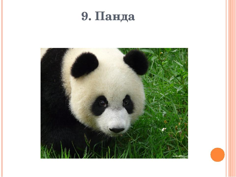 9. Панда