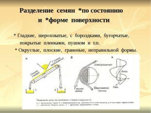 Разделение семян *по состоянию и *форме поверхности * Гладкие, шероховатые,