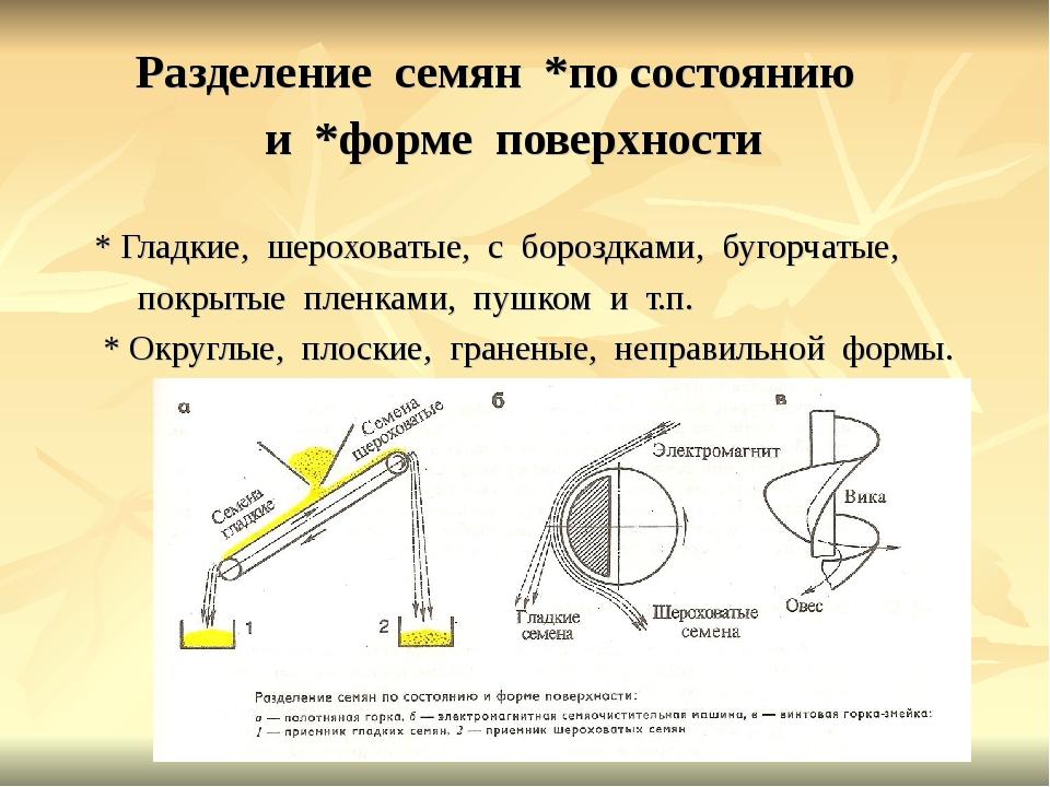 Разделение семян *по состоянию и *форме поверхности * Гладкие, шероховатые,...