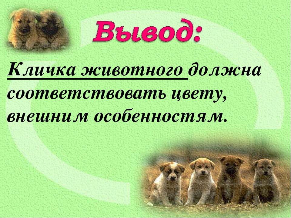 Кличка животного должна соответствовать цвету, внешним особенностям.