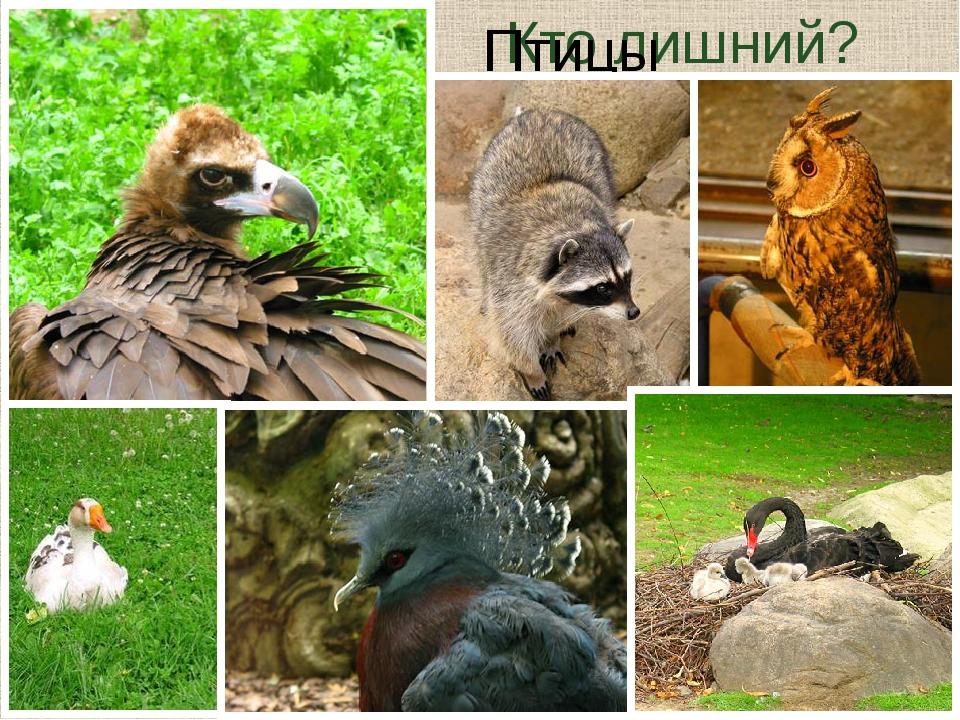 Кто лишний? 2 ноги 2 крыла перья отклады- вают яйца Птицы