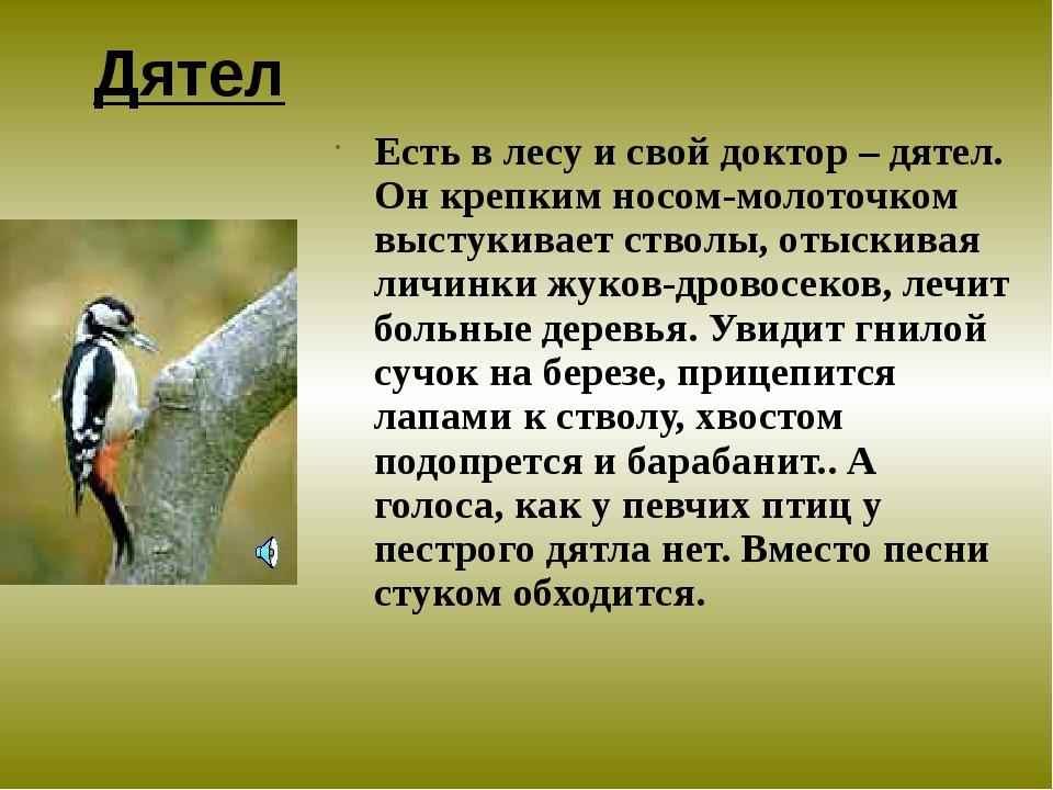 Дятел Есть в лесу и свой доктор – дятел. Он крепким носом-молоточком выстукив...