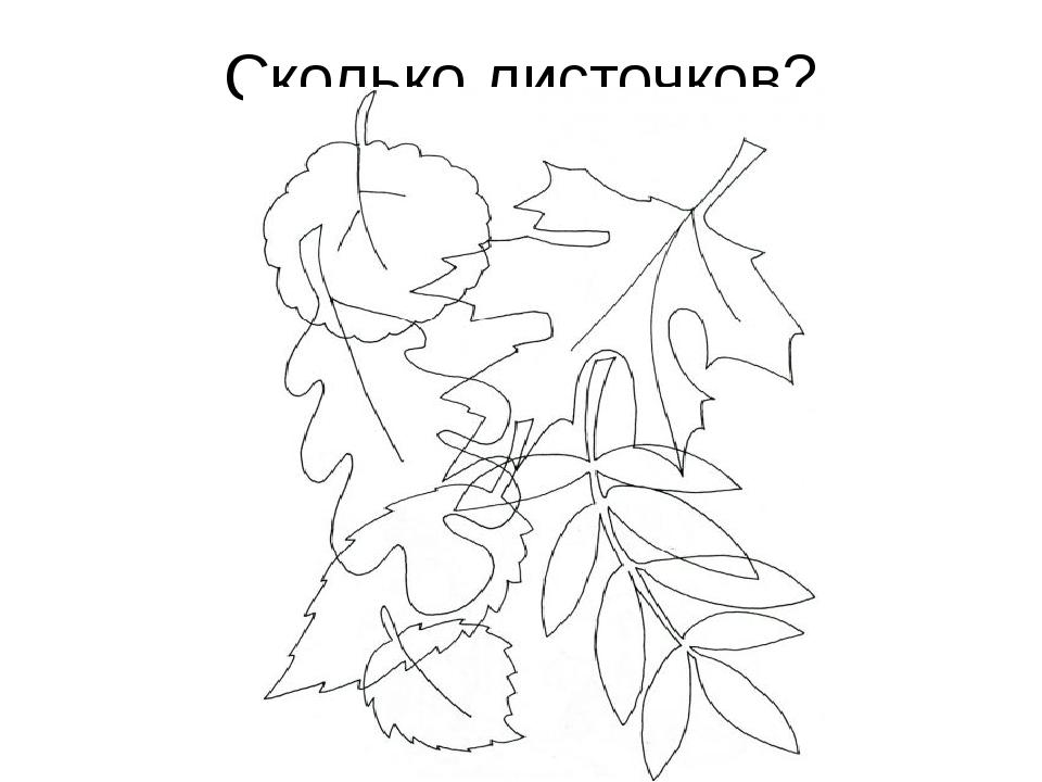 Сколько листочков?