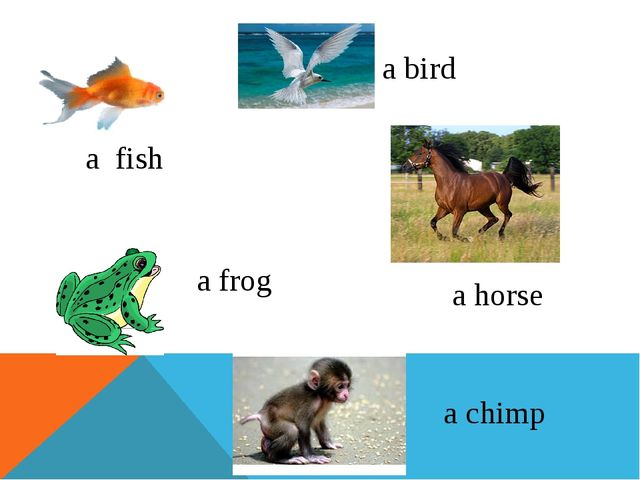 a bird a fish a horse a frog a chimp