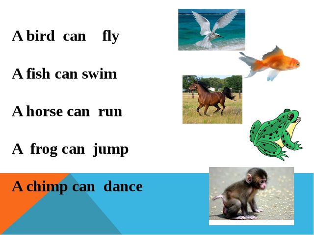 A bird can fly A fish can swim A horse can run A frog can jump A chimp can da...