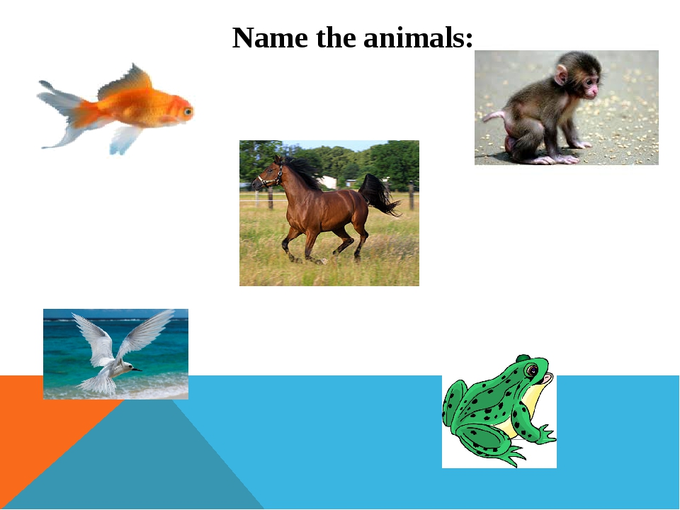 Name the animals: