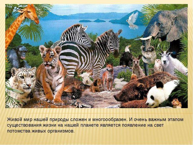 Живой мир нашей природы сложен и многоообразен. И очень важным этапом существ...