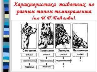Характеристика животных по разным типом темперамента (по И.П.Павлову).