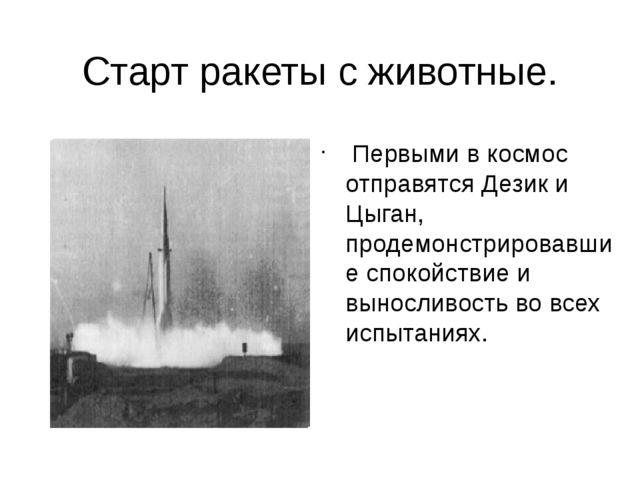 Старт ракеты с животные. Первыми в космос отправятся Дезик и Цыган, продемонс...
