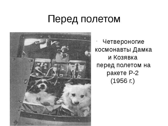 Перед полетом Четвероногие космонавты Дамка и Козявка перед полетом на ракет...