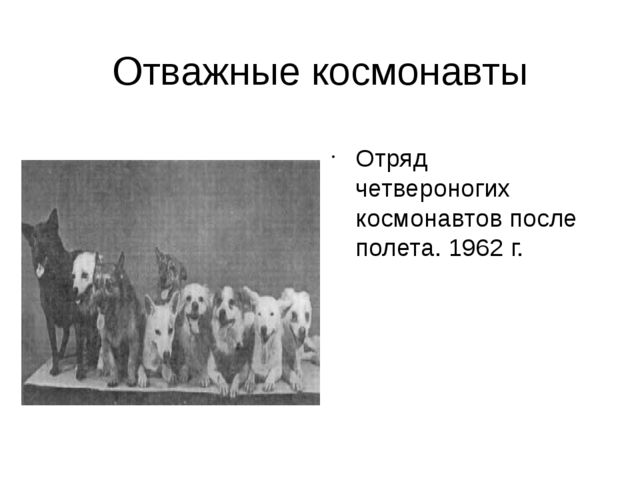 Отважные космонавты Отряд четвероногих космонавтов после полета. 1962 г.
