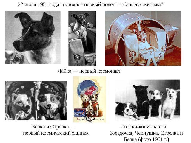 """22 июля 1951 года состоялся первый полет """"собачьего экипажа"""" Лайка — первый к..."""