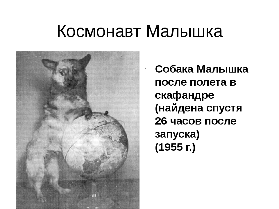 Космонавт Малышка Собака Малышка после полета в скафандре (найдена спустя 26...