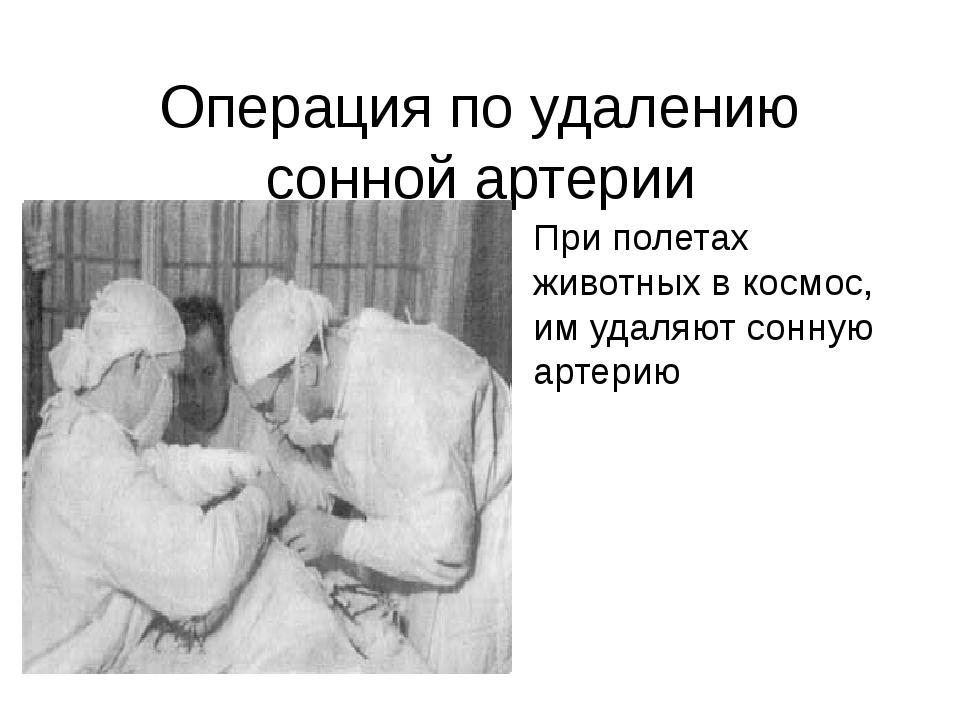 Операция по удалению сонной артерии При полетах животных в космос, им удаляют...