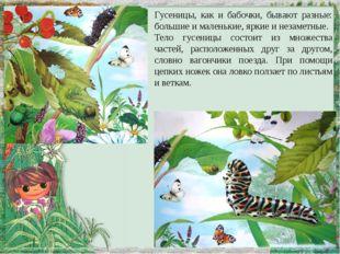 Гусеницы, как и бабочки, бывают разные: большие и маленькие, яркие и незаметн