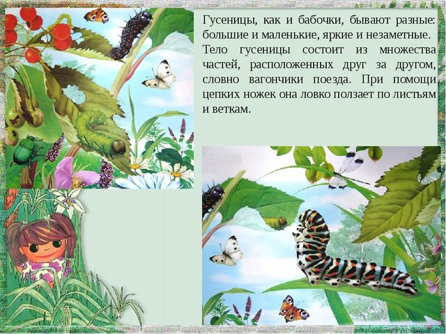 Гусеницы, как и бабочки, бывают разные: большие и маленькие, яркие и незаметн...