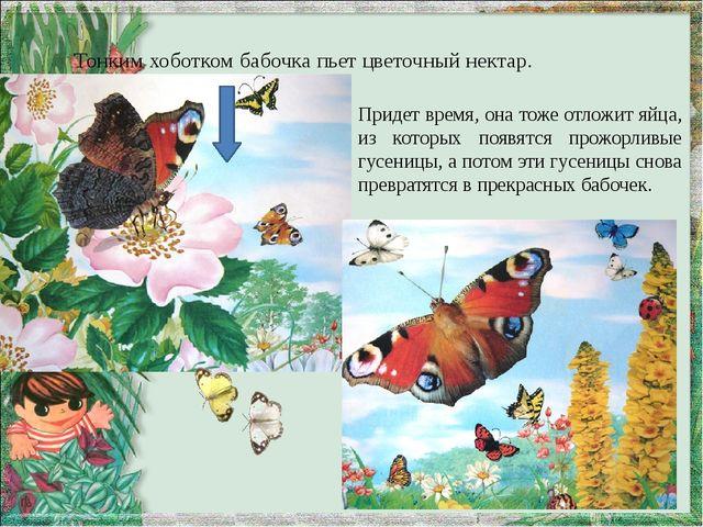 Тонким хоботком бабочка пьет цветочный нектар. Придет время, она тоже отложит...