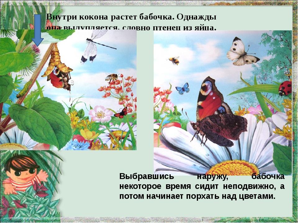 Внутри кокона растет бабочка. Однажды она вылупляется, словно птенец из яйца....