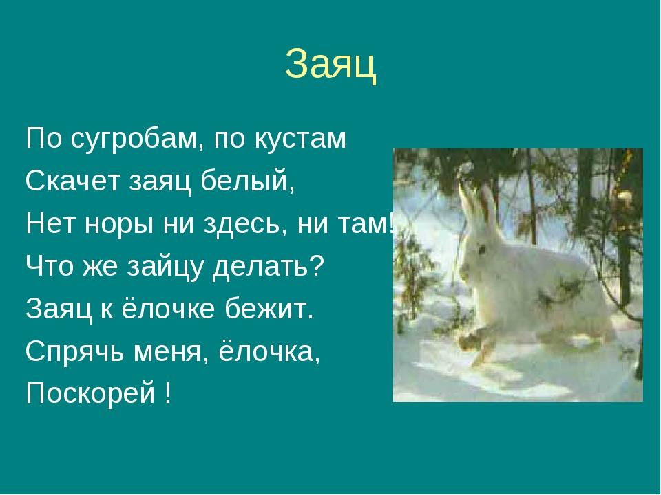 Заяц По сугробам, по кустам Скачет заяц белый, Нет норы ни здесь, ни там! Что...