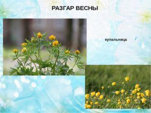 Весна в разгаре РАЗГАР ВЕСНЫ