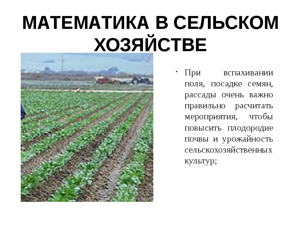 МАТЕМАТИКА В СЕЛЬСКОМ ХОЗЯЙСТВЕ При вспахивании поля, посадке семян, рассады...