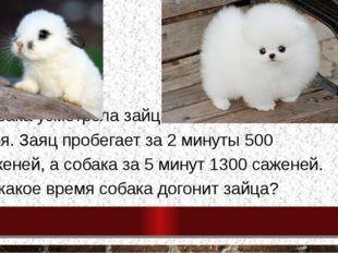 Собака усмотрела зайца в 150 саженей от себя. Заяц пробегает за 2 минуты 500
