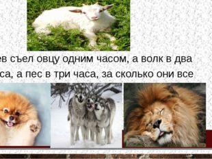 Лев съел овцу одним часом, а волк в два часа, а пес в три часа, за сколько о